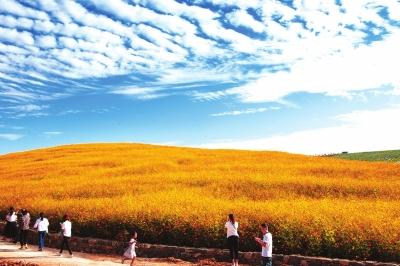 """【县域生态】汝州:由""""煤海""""到""""绿城""""的产业蝶变"""