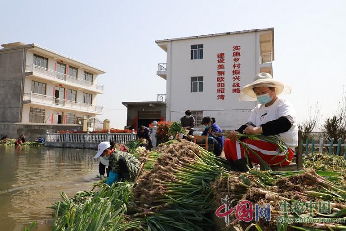 """江西湖口:開啟抗""""疫""""助農""""新模式"""""""
