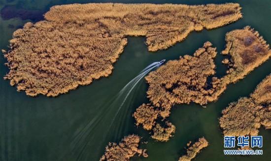 (环境)(1)水生态改善乌梁素海成鸟类天堂