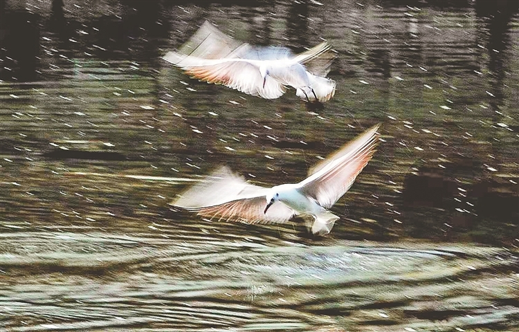 哈尔滨:万顷湿地与江相生相伴